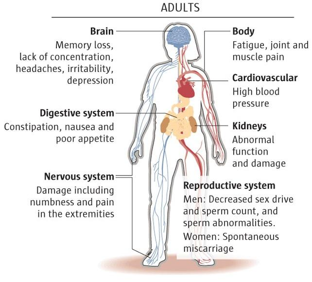 Infocgraphic of how lead can affect adults. Brain: Memory loss, lack of concentration, headaches, irritability, depressions. Digestive system: Constipation, nausea and poor appetite. Nervous system: Damage including numbness and pain in the extremities. Body: Fatigue, joint and muscle pain. Cardiovascular: High blood pressure. Kidneys: Abnormal function and damage. Reproductive: Men, Decreased sex drive and sperm count, and sperm abnormalities. Women, Spontaneous miscarriage.